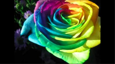 انواع الزهور ومعانيها