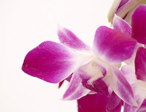 تعرف على نبتة الاوركيد Orchid