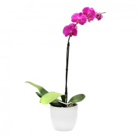 white-pink-orchid-ceramic-pot