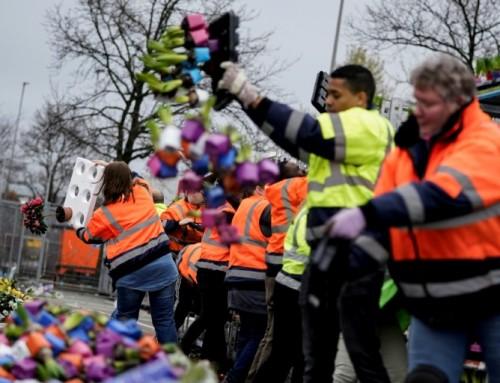 """فيروس """"كورونا"""" يضرب اسواق الزهور في هولندا"""